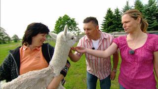 Alpaka-Alarm im Schnäppchenhaus! bei TV NOW