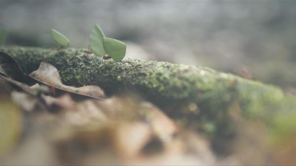 Mysteriöse Phänomene - Mythos UFO
