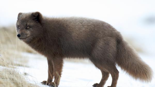 Underdogs - Die bunte Hundefamilie