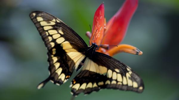 Wings of Life - Quelle des Lebens