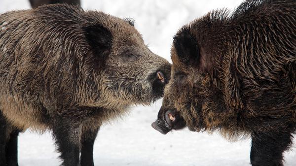 Eiszeit - Tiere im Winter