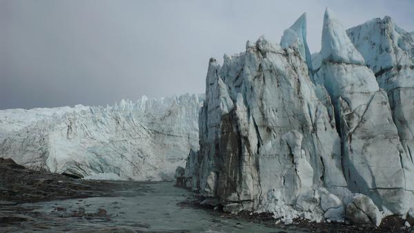 Abenteuer Arktis - Tiere am Polarkreis