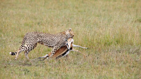 Tierische Jäger