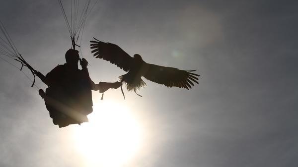 An Eagle Takes Flight - Zurück in die Freiheit
