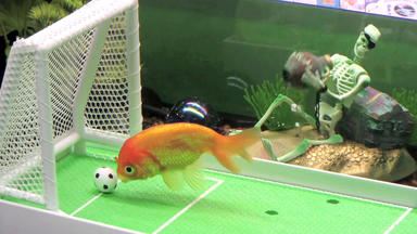 Hundkatzemaus - Fisch-agility