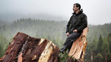 Hadwin's Judgment - Ein Vermächtnis Für Die Umwelt - Hadwin's Judgment - Ein Vermächtnis Für Die Umwelt