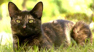 Hundkatzemaus - Katzentreppen Selbstgemacht