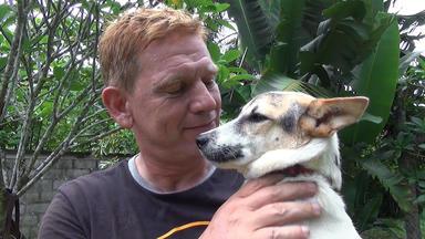 Die Alltagskämpfer - Überleben In Deutschland - Retter Der Straßenhunde