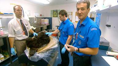Achtung, Zoll! Willkommen In Australien - Der Tote Bär