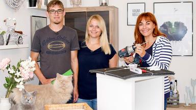 Hundkatzemaus - Tipps Zur Haltung Von Wohnungskatzen