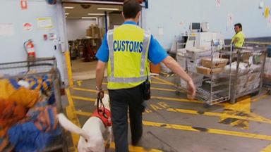 Achtung, Zoll! Willkommen In Australien - Die Beamten Durchsuchen Eine Möbelfabrik