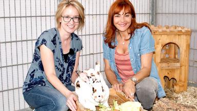 Hundkatzemaus - Thema Heute U.a.: Ernährungstipps Für Kaninchen
