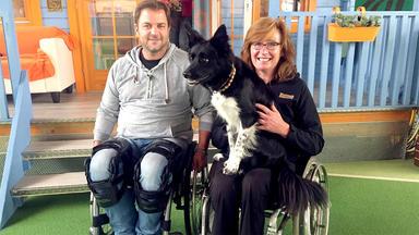 Der Hundeprofi Unterwegs - Folge 17: Das Rollstuhl-experiment