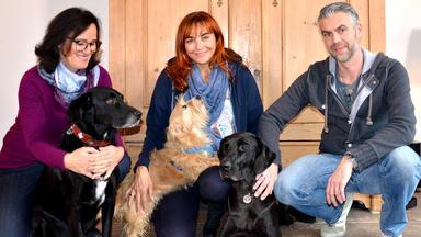 Hundkatzemaus - Thema Heute U.a.: Silvesterangst Beim Hund