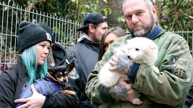 Harte Hunde - Folge 4: Kampf Dem Welpenhandel