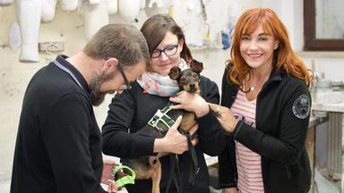 Hundkatzemaus - Thema Heute U.a.: Tierorthopädie