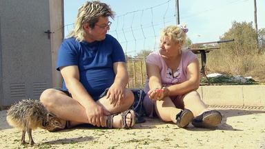 Schwiegertochter Gesucht - Marco Und Ursula Auf Der Straußenfarm