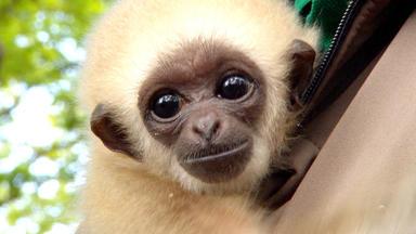 Tierbabys - Süß Und Wild! - Thema Heute U.a.: Affeneltern Gesucht