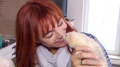 Hundkatzemaus - Thema Heute U.a.: Frettchen-haltung