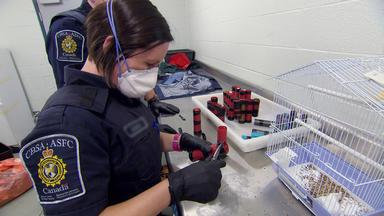 Border Patrol Canada - Einsatz An Der Grenze - Vom Grenz- Zum Tierschützer
