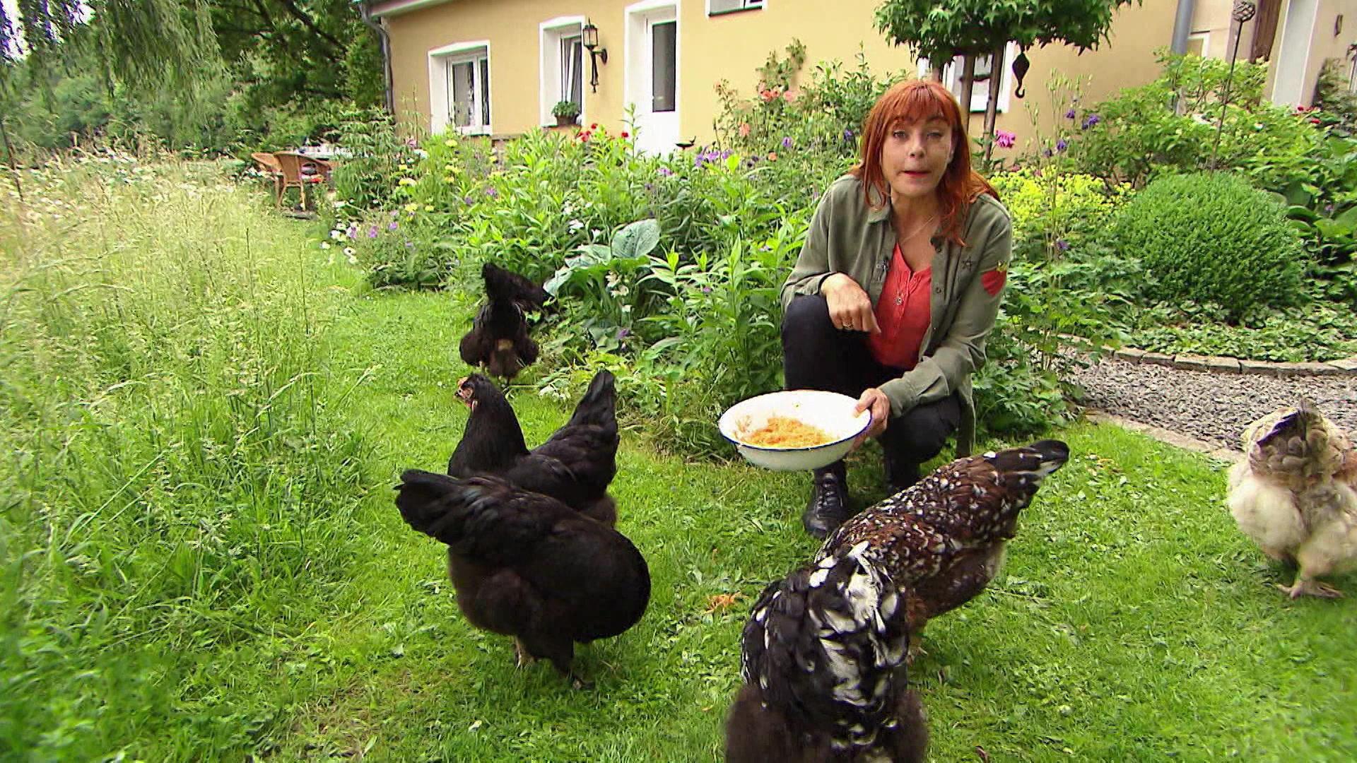 Thema heute u.a.: Private Hühnerhaltung   Folge 16