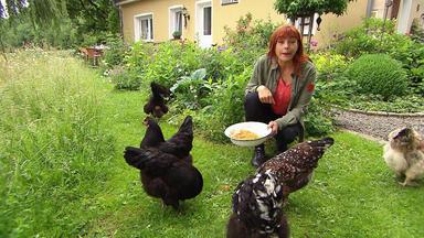 Hundkatzemaus - Thema Heute U.a.: Private Hühnerhaltung