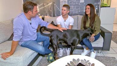 Der V.i.p. Hundeprofi - Heute U.a. Mit: Joey Heindle Und \