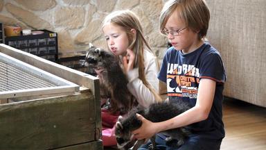 Die Fußbahns - Eine Schrecklich Tierische Familie - Die Waschbären Sind Los