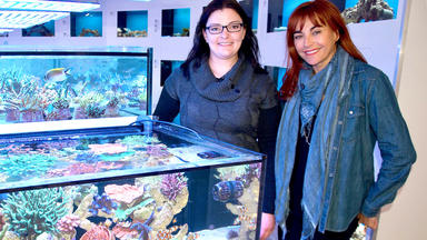 Hundkatzemaus - Thema Heute U.a.: Nachhaltige Meerwasseraquaristik
