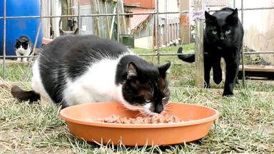 Hundkatzemaus - Thema Heute U.a.: Streunerkatzen