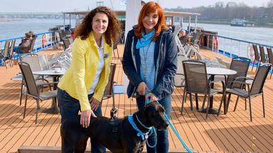 Hundkatzemaus - Thema Heute U.a.: Flusskreuzfahrt Mit Hund