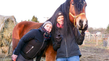 Die Pferdeprofis - Heute U.a. Mit: Christin Mit Kaltblut \