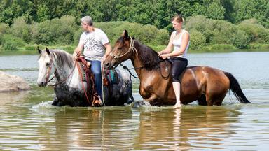 Die Pferdeprofis - Heute U.a. Mit: Danielle Mit Holländischem Warmblut \