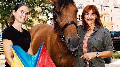 Hundkatzemaus - Thema Heute U.a.: Gelassenheitstraining Für Pferde