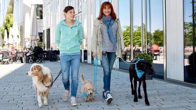 Hundkatzemaus - Thema Heute U.a.: \