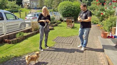 Der Hundeprofi - Heute U.a. Mit: Chrissy Und Hündin \