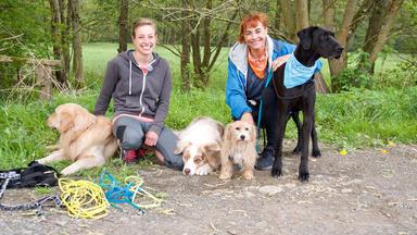Hundkatzemaus - Thema Heute U.a.: Joggen Mit Hund