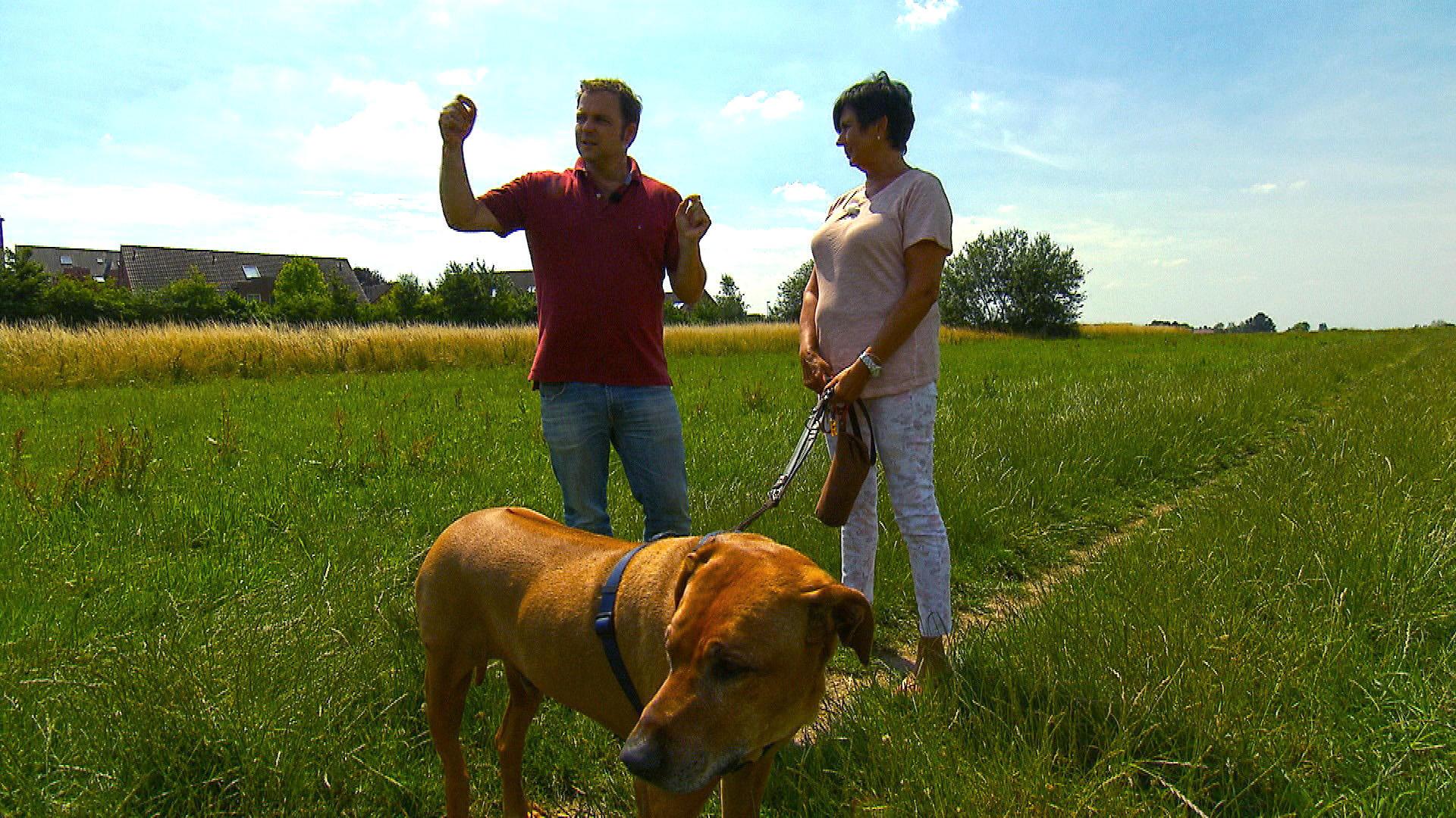 """Heute u.a. mit: Schäferhund """"Feedback""""   Folge 2"""