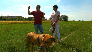 Der Hundeprofi - Heute U.a. Mit: Schäferhund \