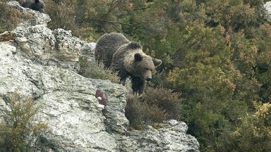 Im Reich Der Bergbären - Im Reich Der Bergbären