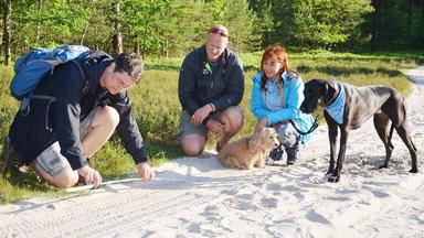 Hundkatzemaus - Thema Heute U.a.: Wölfe In Deutschland