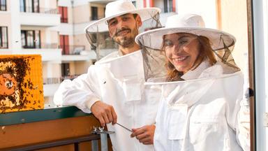 Hundkatzemaus - Thema Heute U.a.: Bienen In Der Stadt