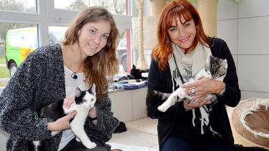 Hundkatzemaus - Thema Heute U.a.: Kostencheck Katze