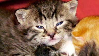 Tierbabys - Süß Und Wild! - Thema Heute U.a.: Rettung Für Katzenkinder