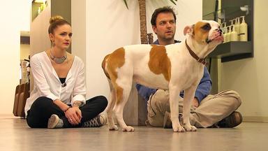 Der Hundeprofi - Heute Mit: Englische-bulldogge \