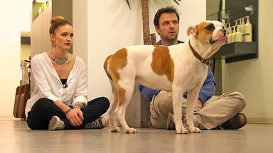 Der Hundeprofi - Heute U.a. Mit: \
