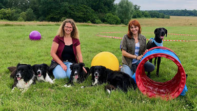 Hundkatzemaus - Heute U.a.: Longieren Mit Hund