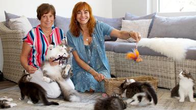 Hundkatzemaus - Thema Heute U.a.: Rasseportrait Norwegische Waldkatze