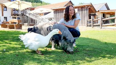 Tierisch Beste Freunde - Heute U.a. Mit: Hängebauchschwein Bonnie Und Gans Möp Möp