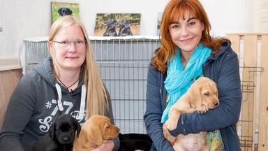 Hundkatzemaus - Heute U.a.: Rasseportrait Labrador Retriever